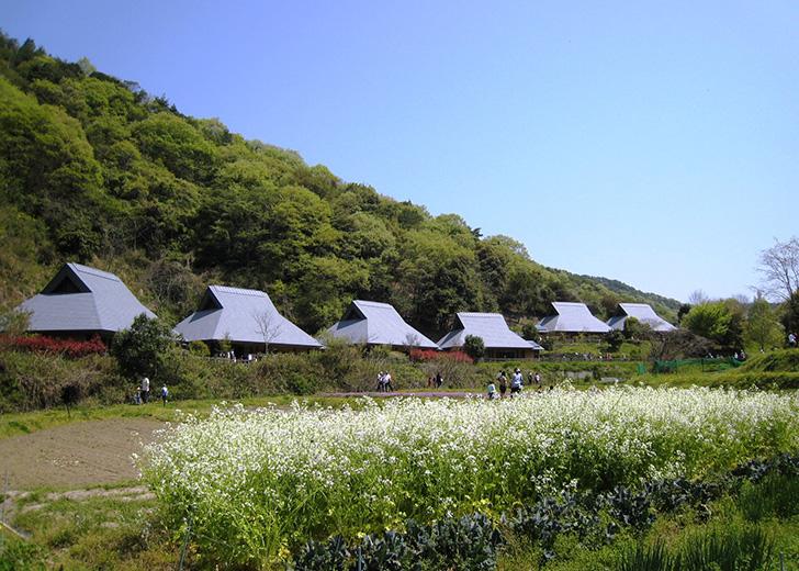 Waiwai-mura in spring